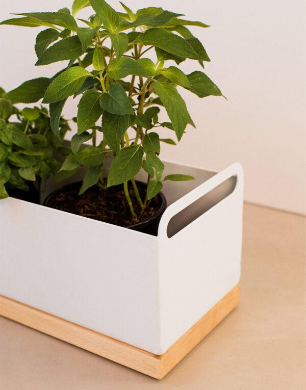 Palmy herb box